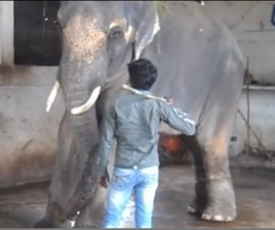 Bollywood Stars Campaigning For Elephant's Release
